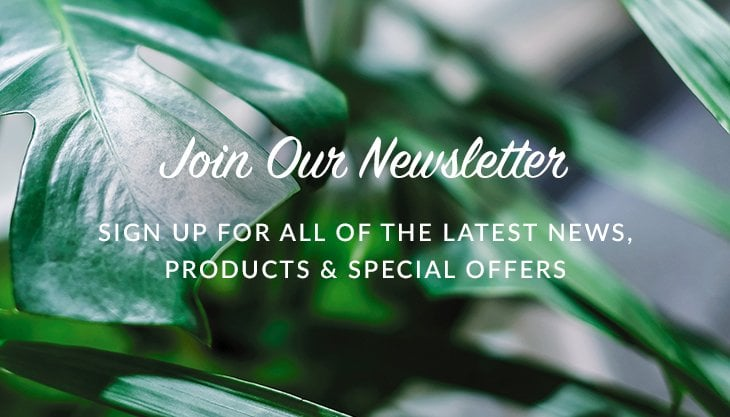Newsletter Pop Up